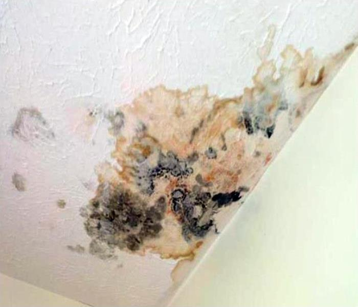 Mold Damage In West Hollywood Before