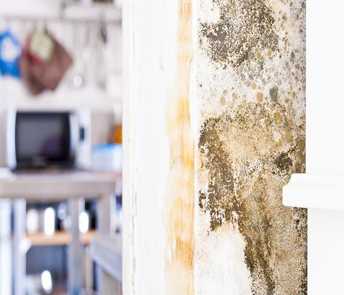 Mold Remediation Removing  Mold Damage From Your Bel Air Property
